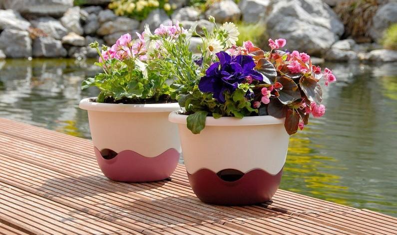 Chýba ju vám bylinky zo záhradky? Zasaďte ich za okno!