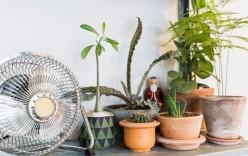 Ako zabrániť prehrievanie interiéru?