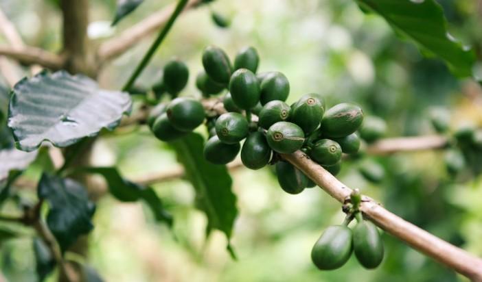 7 tipů jak využít kávu na zahradě
